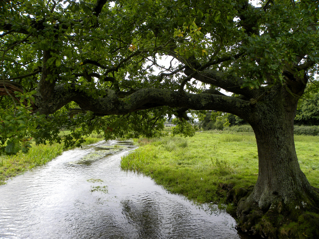 Oak Tree By the River - Bostic genealogy, family found